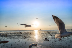 Menge der Vogelseemöwe hoch in der Luft mit seiner Flügelverbreitung fliegend Stockfotografie