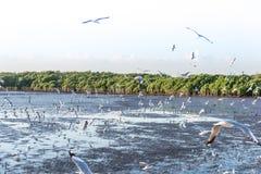 Menge der Vogelseemöwe hoch in der Luft mit seiner Flügelverbreitung fliegend lizenzfreies stockbild