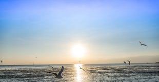 Menge der Vogelseemöwe hoch in der Luft mit seiner Flügelverbreitung fliegend stockbild
