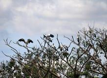 Menge des offenen berechneten Storchvogels hocken und geflügelt am Baum auf blauem Himmel und weißem Wolkenhintergrund stockfoto