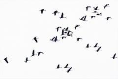 Menge, die zur Sonne fliegt. Lizenzfreie Stockfotografie