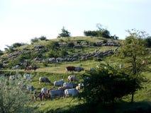 Menge und Herde auf Abhang Stockfotografie