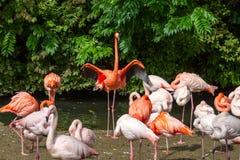 Menge von bunten rosa orange Flamingos Lizenzfreie Stockfotografie