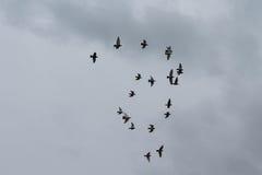 Menge von den Fliegentauben, die eine Form bilden lizenzfreie stockfotos