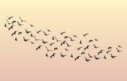 Menge von den Gänsen, die in die Dämmerung auf dem Himmel fliegen Lizenzfreie Abbildung