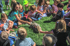 Menge von den Kindern, die ein Kaninchen streicheln Stockfotos