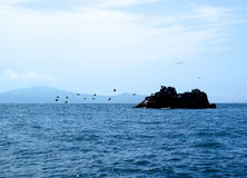 Menge von den Kormoranen, die von der kleinen Insel sich entfernen Lizenzfreie Stockfotos