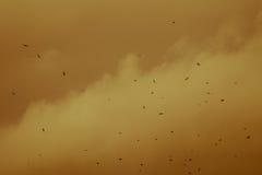 Menge von den Krähen, die in den Himmel auf einem gelben Hintergrund fliegen Stockbild