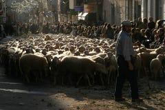 Menge von den Schafen, die Dorf kreuzen Stockbilder