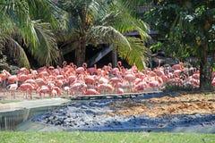 Menge von Flamingos an Bush-Gärten Lizenzfreies Stockfoto