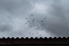 Menge von Fliegentauben unter drastischem Himmel stockbild