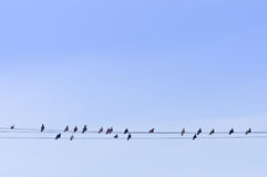 Menge von Tauben auf Energie-Drähten Stockbilder