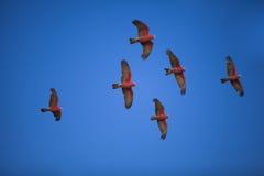 Menge von Vögeln Stockbild