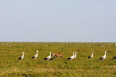 Menge von Vögeln auf Savanne von Serengeti, Tansania Stockfotos