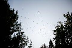Menge von Vögeln an der Dämmerung Stockbild