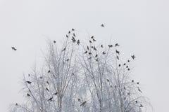 Menge von Vögeln im Winter lizenzfreies stockbild