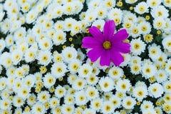Mengeling van bloem Royalty-vrije Stock Fotografie