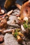 Mengeling van bospaddestoelen Stock Foto