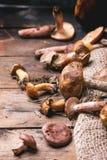 Mengeling van bospaddestoelen Stock Afbeeldingen