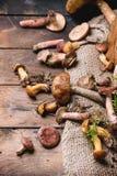 Mengeling van bospaddestoelen Royalty-vrije Stock Afbeelding