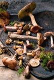 Mengeling van bospaddestoelen Stock Fotografie