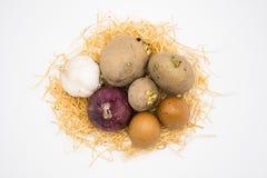 Mengeling van de ui en het knoflook van de eiaardappel op het nest met witte achtergrond royalty-vrije stock foto