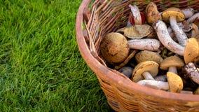 Mengeling van eetbare bospaddestoelen in een mand Stock Foto