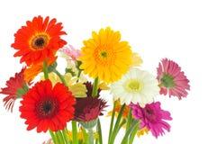 Mengeling van gerberbloemen Stock Afbeeldingen