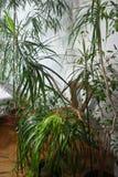 Mengeling van houseplants in de ruimte royalty-vrije stock foto
