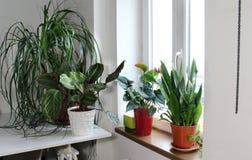 Mengeling van houseplants in de witte ruimte stock afbeelding