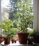 Mengeling van houseplants op het venster royalty-vrije stock foto