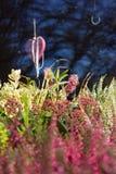 Mengeling van kleurrijke installaties van heide en een hart royalty-vrije stock foto