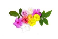 Mengeling van mooi die bloem en blad op een witte achtergrond wordt geïsoleerd Royalty-vrije Stock Afbeeldingen