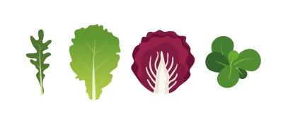Mengeling van saladebladeren Arugula, sla, witte waterkers en radicchio Vectordieillustratie in vlakke stijl wordt geplaatst vector illustratie