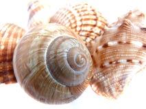 Mengeling van shell Royalty-vrije Stock Afbeeldingen