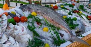 mengeling van verschillende vissen in ijsblokjes, met rode, groene, oranje paprika, tomaten, kalk, citroen en dille in houten lij stock foto