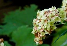 Mengeling van witte en gerotte bruine bloemen Stock Foto