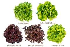 Mengelings Plantaardige salade royalty-vrije stock afbeelding
