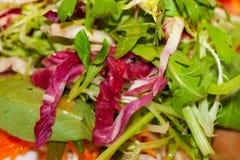 Mengelings verse bladeren van groene salade royalty-vrije stock afbeelding