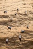 Mengen der Seemöwe auf Wasser Lizenzfreie Stockfotos