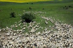 Mengen und Herden Aer auf dem Grasland Lizenzfreie Stockbilder