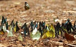 Mengen von Schmetterlingen leben im Wald, Weichzeichnungsbild Stockfotografie
