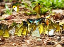 Mengen von Schmetterlingen leben im Wald, Weichzeichnungsbild Lizenzfreie Stockfotografie