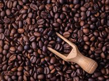 Mengsel van verschillende soorten koffiebonen Klaar voor gebruik Stock Afbeelding