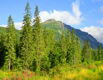 Mengusovska Valley in Vysoke Tatry High Tatras, Slovakia Royalty Free Stock Image