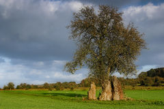 Menhir trio royalty free stock photography
