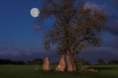 Menhirs at night. Late evening shot of the three famous menhirs of Oppagne, and their solitary tree royalty free stock images