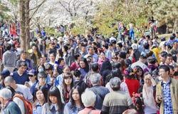 Menigte bij Yuyuantan-park tijdens de Lente Cherry Tree Blossom, Peking, China royalty-vrije stock afbeelding