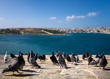Menigte op de waterkant duiven valletta Birgu Kalkara Bormla Het Eiland Malta royalty-vrije stock fotografie