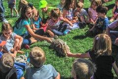 Menigte van Kinderen die een konijn petting Stock Foto's